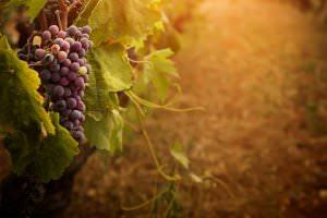 Denver Wine Tours Bachelorette Party Ideas
