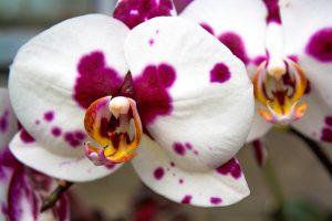 Denver botanic gardens top 11 romantic things to do in denver