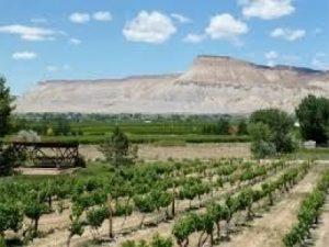 carlson vineyard palisade - Mile High Wine Tours